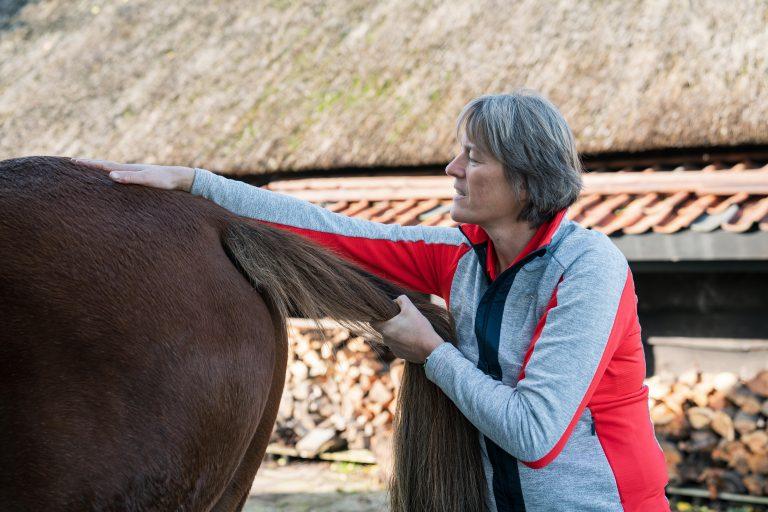 Paardenosteopathie-14