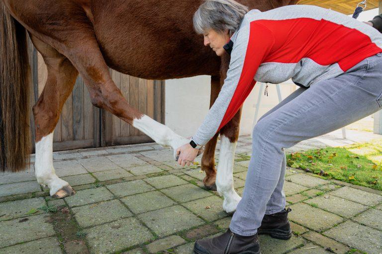 Paardenosteopathie-28