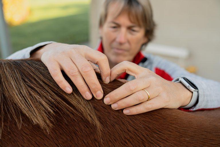 Paardenosteopathie-6